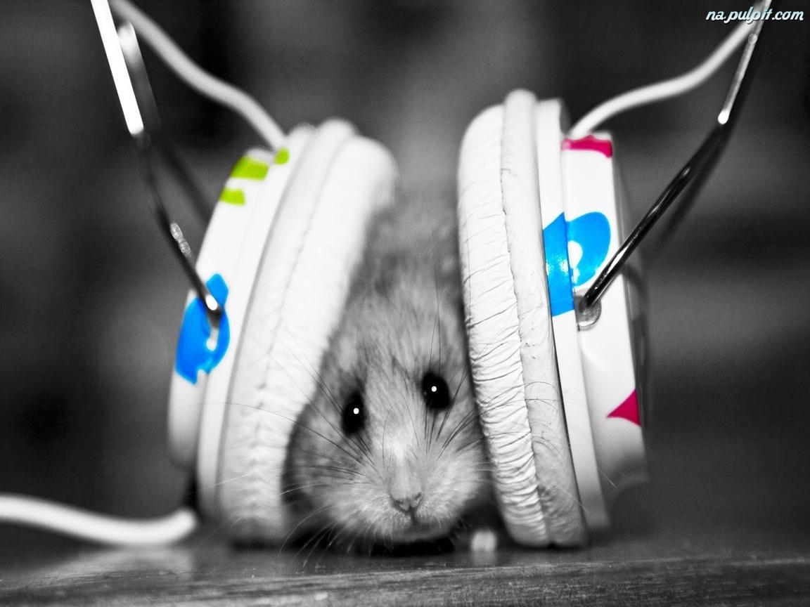Muzyka, Chomik, Słuchawki